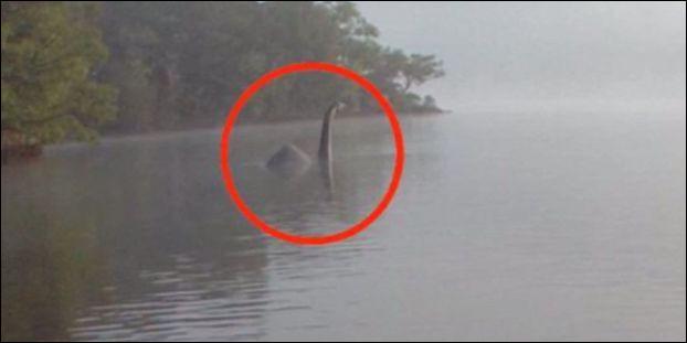Quand débutent les premières recherches sérieuses consistant à trouver des preuves de l'existence de Nessie ?
