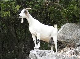 Outre le fait d'appartenir à un certain Monsieur Seguin, à quoi peut correspondre le nom de cet animal ?