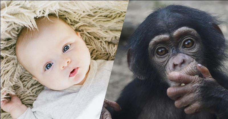 L'être humain a … de poils que l'animal de la photo !