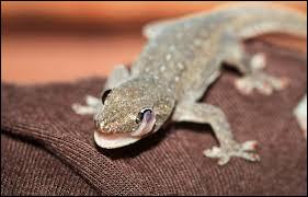 Une partie du corps de ce reptile est actuellement étudiée par les scientifiques !