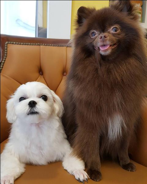 Comment s'appellent les chiens de Jennie ?