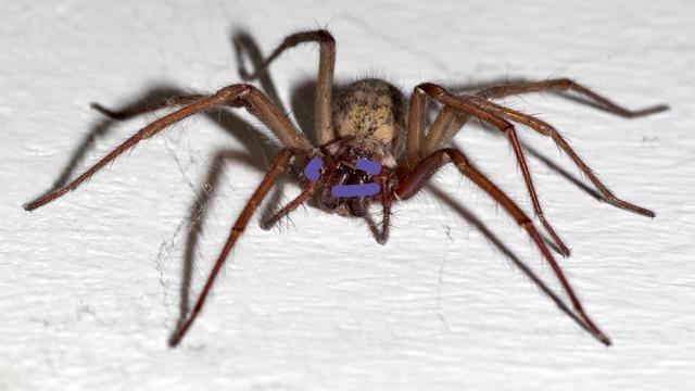 Quiz sur les araignées