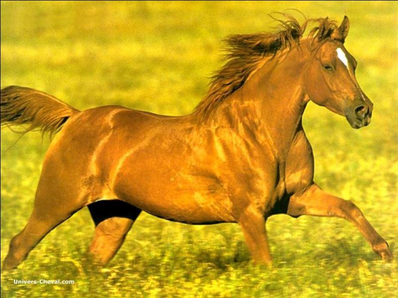 Comment s'appelle la couleur du cheval ?