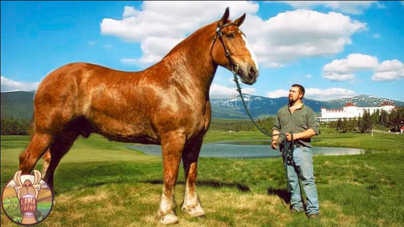 Comment appelle-t-on une marque blanche au-dessus du sabot du cheval ?
