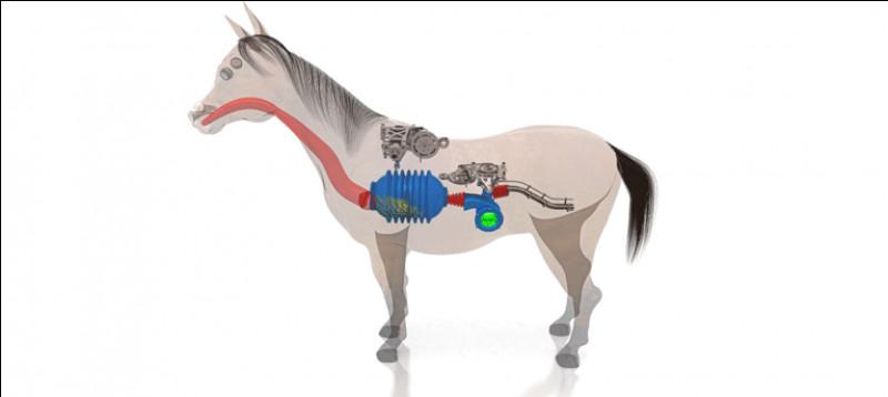 Quelles sont les 3 parties du cheval ?