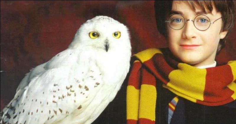 """Qui a dit : """"J'ai très envie d'un hibou. Harry a Hedwige, toi, tu as Errol..."""""""