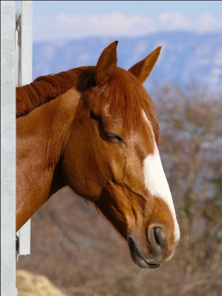 Dans quelle phase de sommeil le cheval peut-il dormir debout ?
