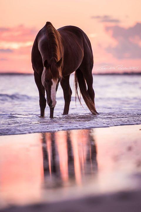 Un animal - Le cheval