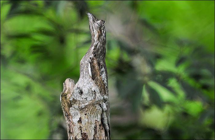 Un animal se cache peut-être sur cette photo !