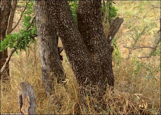Cet animal vous voit, mais est-ce que vous vous le voyez ?