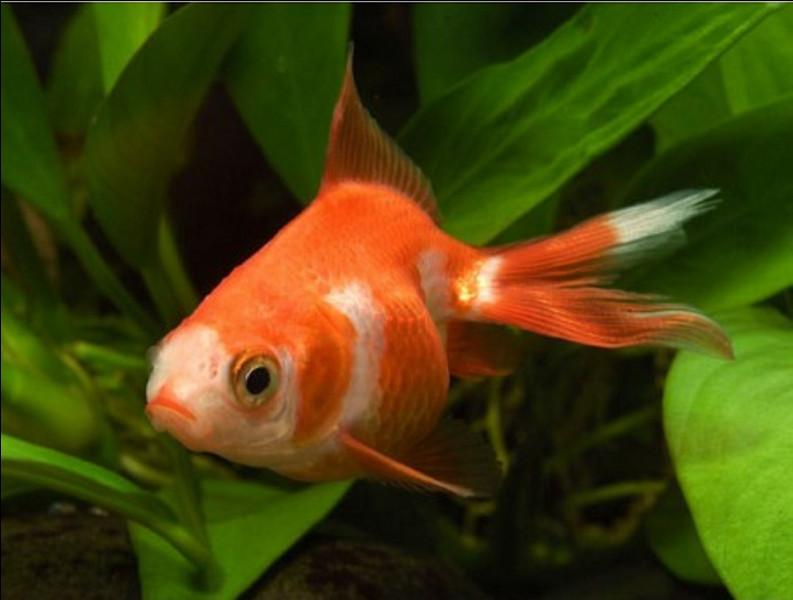 Le poisson a-t-il un odorat ?