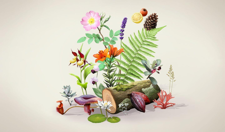 Botanique (11)
