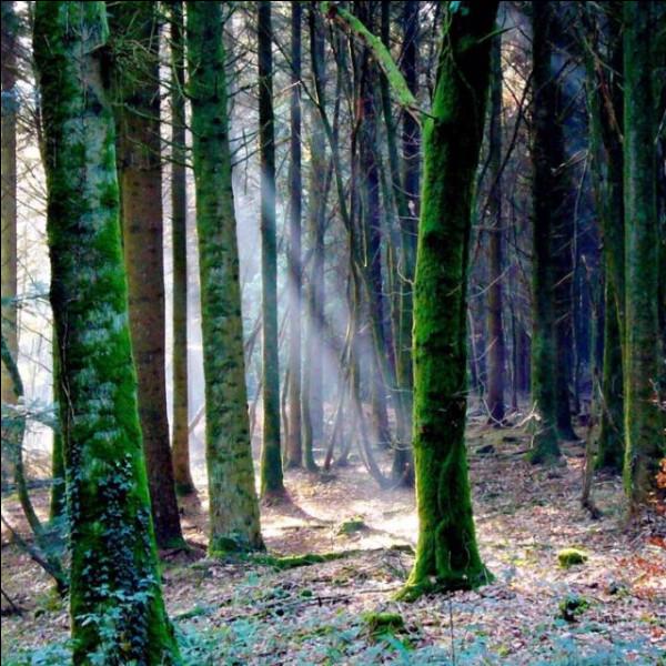 Aujourd'hui, c'est dans cette forêt que les légendes continuent, mais l'auteur s'est en vérité inspiré d'une autre forêt ! Laquelle ?