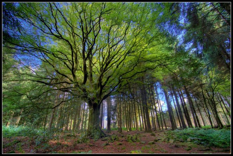 Veuillez m'excuser, j'ai un léger trou de mémoire... Pouvez-vous me rappeler combien d'hectares cette forêt couvre-t-elle ?