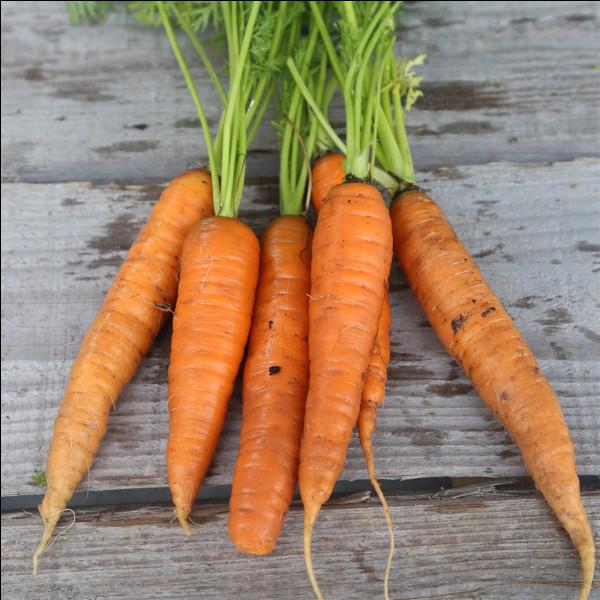 Une carotte veut se suicider mais elle échoue. Que dit-elle ?