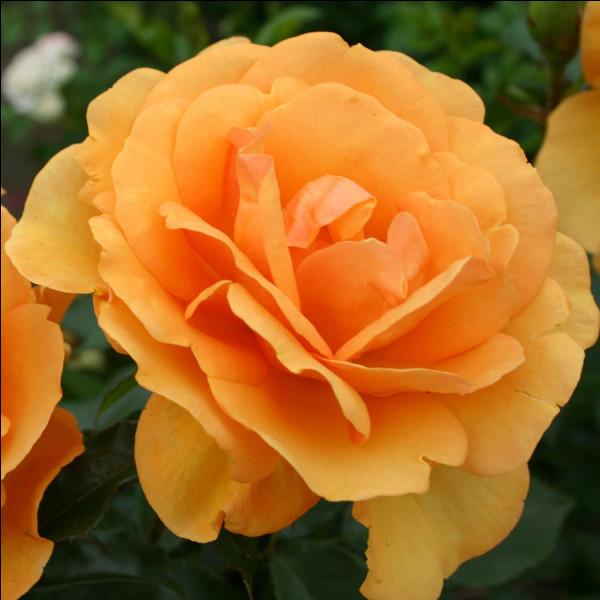 "Qui accompagne Kathleen Turner dans le film ""La Guerre des Rose"" ?"