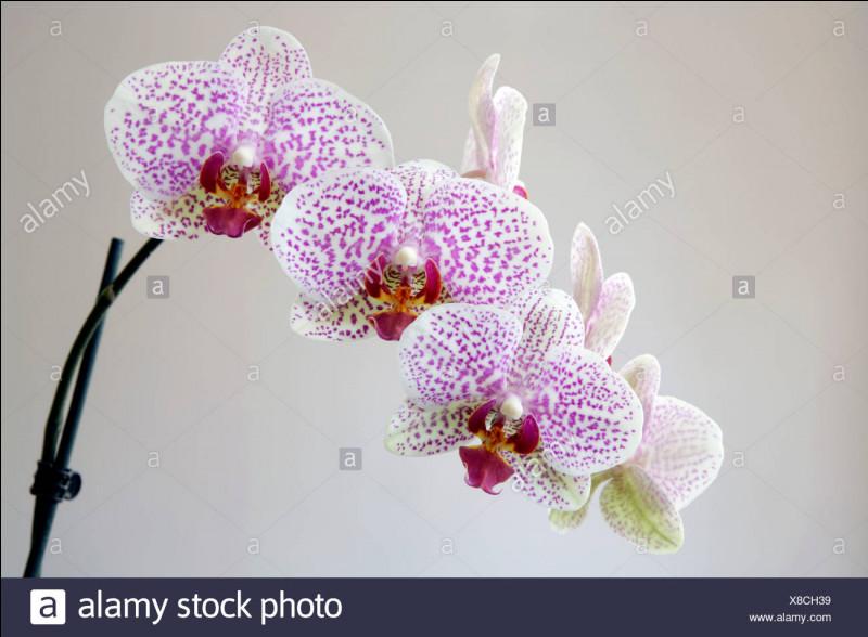"""Qui a écrit """"Pas d'orchidées pour miss Blandish"""" ?"""