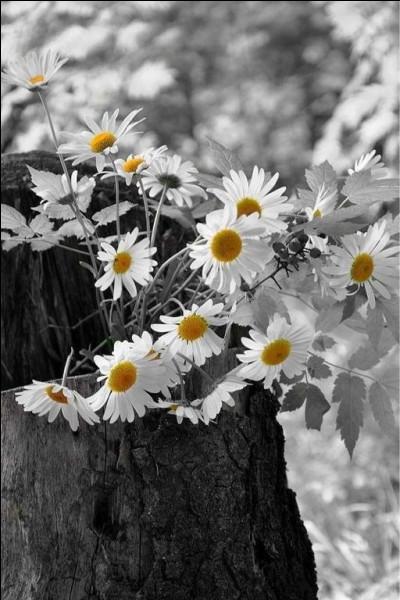 Que dire de cette fleur dans un film d'Henri Verneuil !