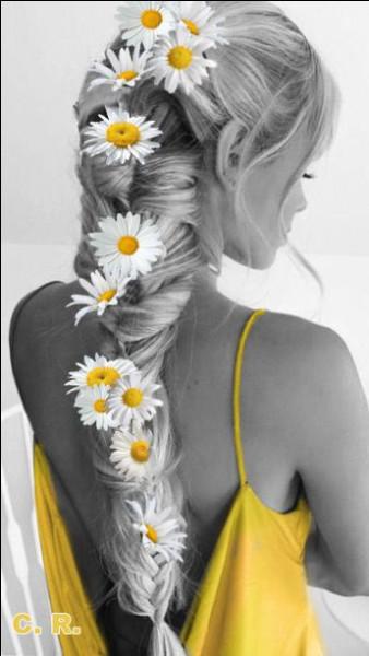 """Il chantait """"Si vous allez à San Francisco, vous les verrez des fleurs dans les cheveux..."""" :"""