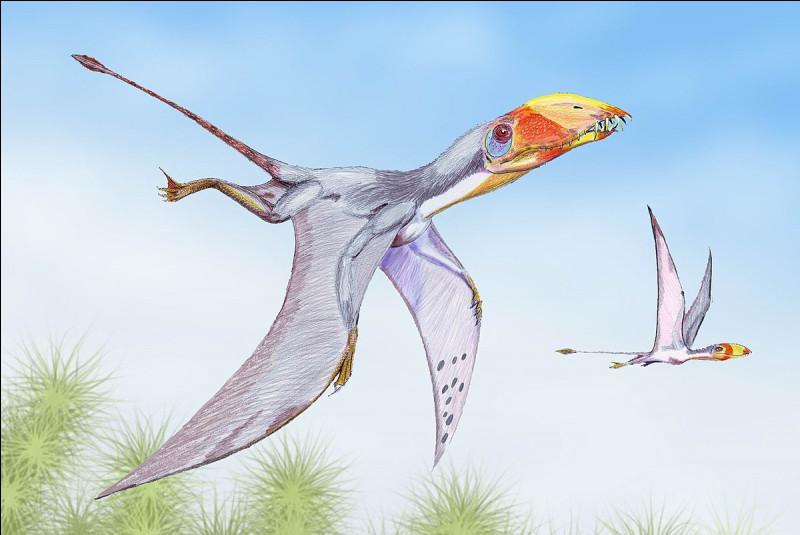 Quelle est la taille d'un dimorphodon ?