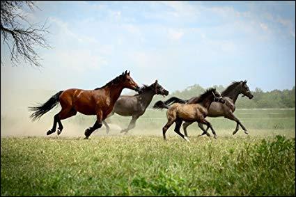 Comment appelle-t-on les chevaux qui n'ont pas de propriétaire ?