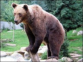 Nommez-moi la famille des ours.