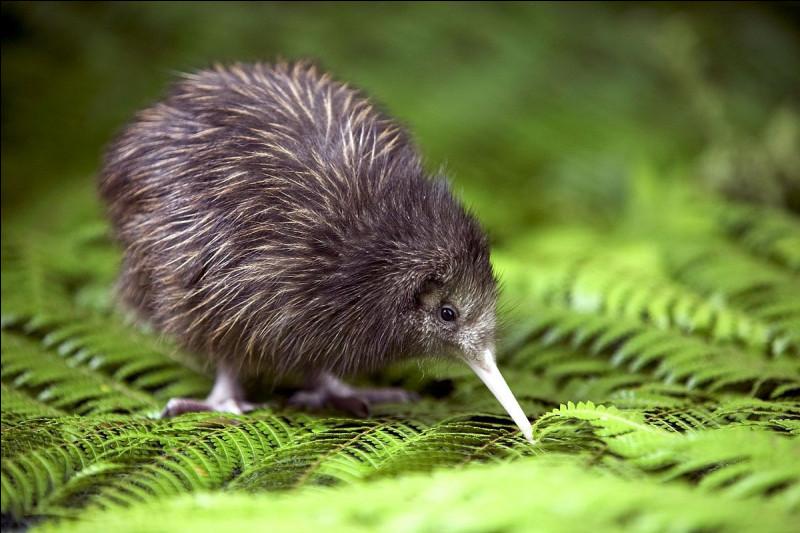 Maintenant, le kiwi.