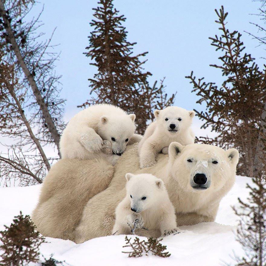 Les familles #2 (Les animaux)