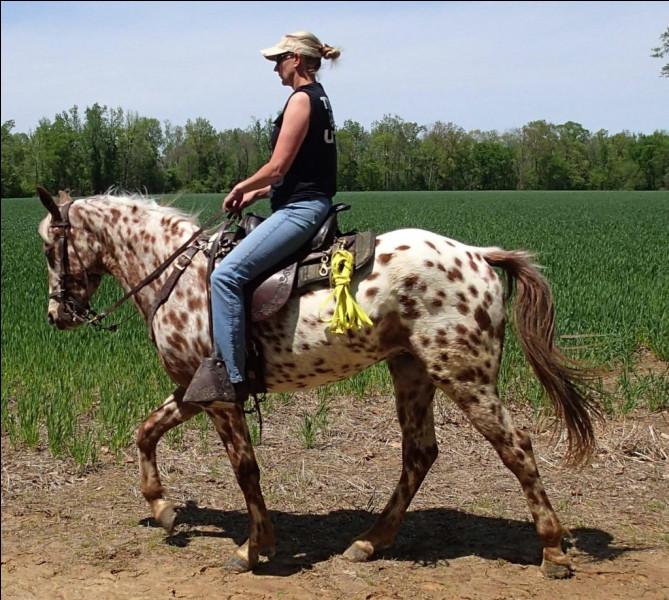 Il ressemble au poney des Amériques, mais pourtant...