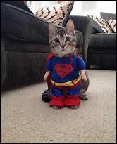 Quels sont les chats qui ont des pouvoirs ?