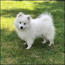 Retrouvez le nom de la race de chien.