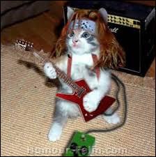 Quel style de musique conviendrait le mieux à ce chat ?