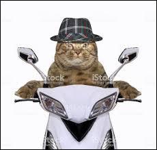 Ch'alors, que fait ce chat ?