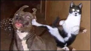 À qui ce chat donne-t-il un coup ?