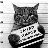 Pourquoi ce chat se retrouve-t-il en prison ?