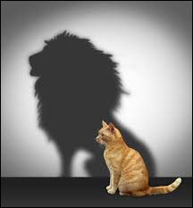 Qui se cache derrière l'ombre de ce chat ?