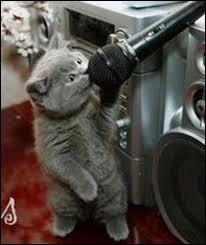 Quelle est la race de chat chanteur ?