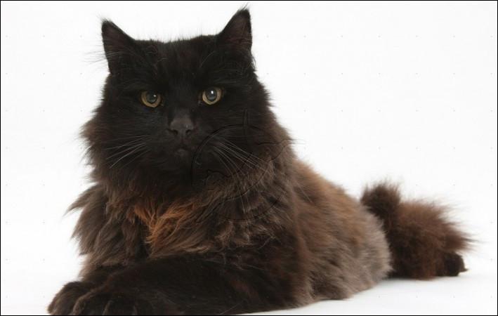Trouvez le nom de ce chat !