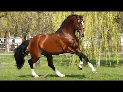 Et pour terminer, donnez-moi les noms des marques blanches de ce cheval.