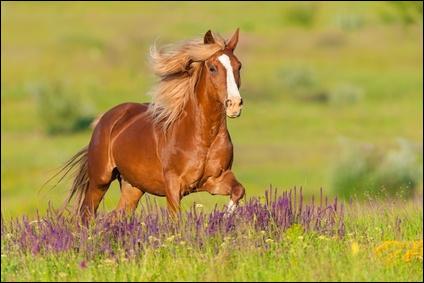 Comment appelle-t-on la partie blanche sur la tête de ce cheval ?
