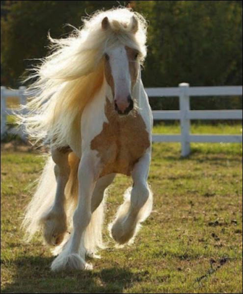Comment est ce cheval ?