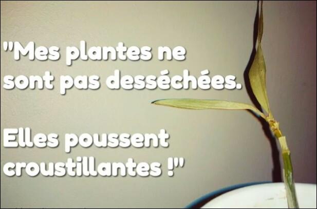 Combien mesure une plante d'ail ?