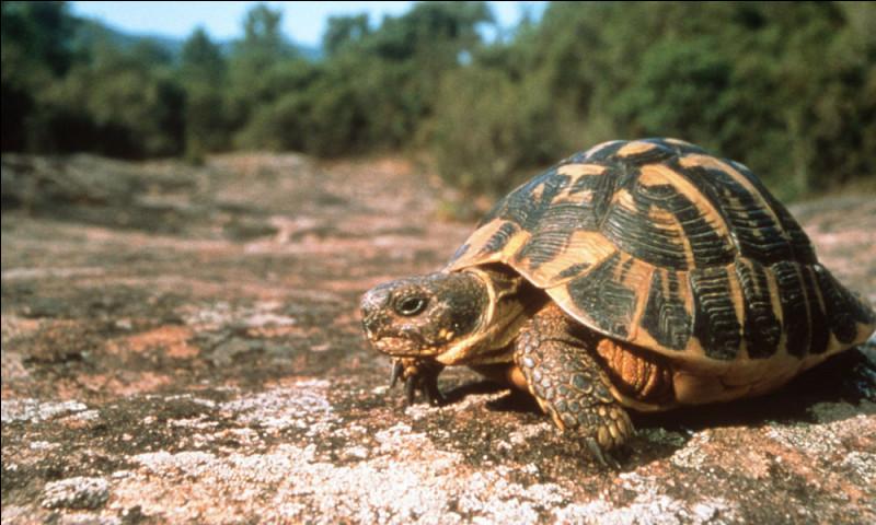 Trouvez l'intruse parmi ces espèces de tortues.