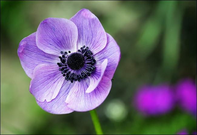 Trouvez l'intruse parmi ces fleurs violettes.