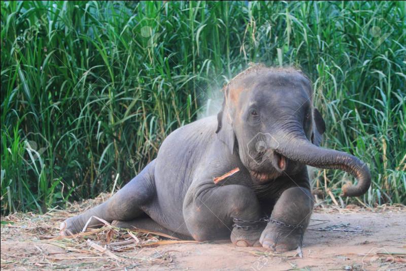 Quel pays asiatique est symbolisé par l'éléphant blanc ?