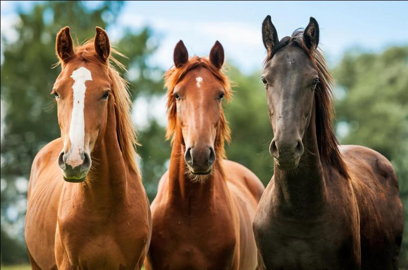 Quelle est la meilleure monture pour un cavalier intermédiaire ?