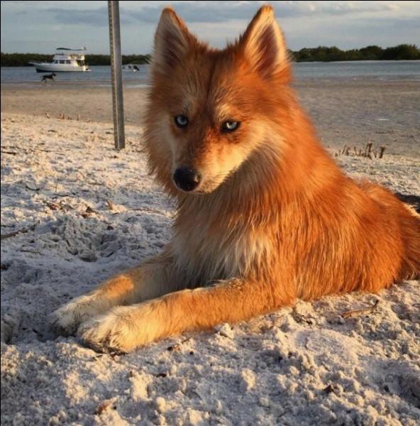 Veux-tu faire des randonnées avec ton chien (ou du sport) ?