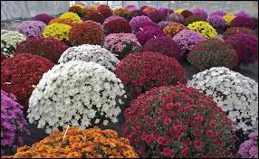 À quelle fleur est associé le cimetière ?