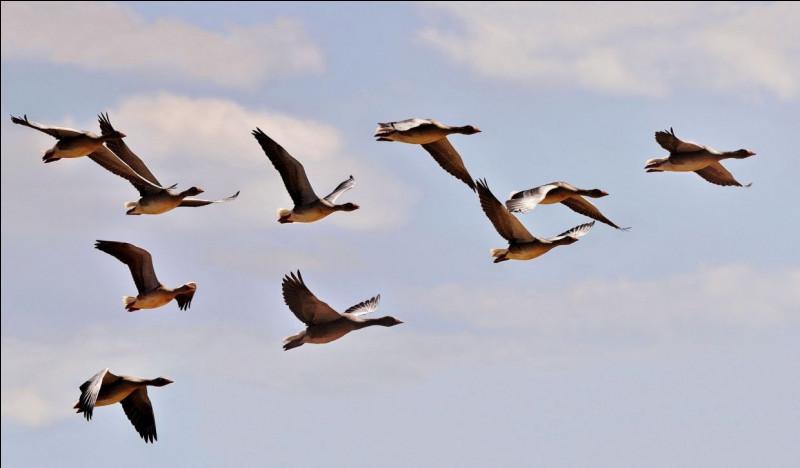 Par dessus l'étang - Soudain j'ai vu - Passer les oies sauvages !