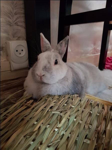 Le lapin exprime sa joie de vivre en :
